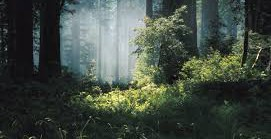 The trees of the forest will sing for joy