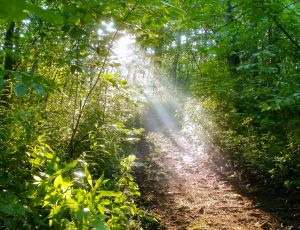 A light to my path