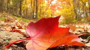 dying-leaf2