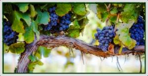 living-vine
